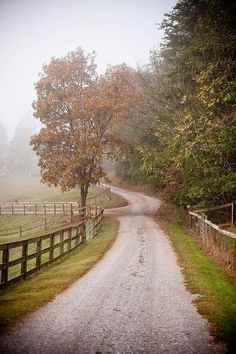 The road to my farmhouse...❤️