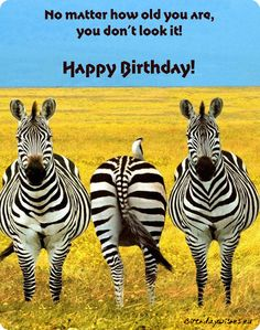 Zebra by Elaine Murphy (Source) A to Z April Challenge, and a challenge it has indeed been. And Since Lee decided to use a Zebra as his . Zoo Animals, Funny Animals, Cute Animals, Wild Animals, Animal Memes, Zebras, Mundo Animal, All Gods Creatures, African Animals