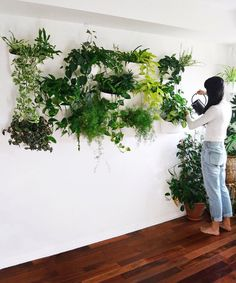"""35 Beautiful Living Wall Indoor Decoration Ideas To Be A Fresh Home - What were the hanging gardens of Babylon really like? As one of the """"Seven Great Wonders of the Ancient World,"""" they must have been pretty spectacular. Indoor Plant Wall, Indoor Garden, Indoor Plants, Plant Wall Diy, Hanging Plant Wall, Indoor Wall Planters, Garden Planters, Eco Garden, Concrete Planters"""