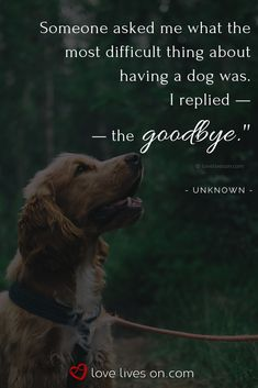 Loss of a Pet Quotes