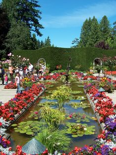 Butchart Gardens   visiting the legendary butchart gardens is almost mandatory while in