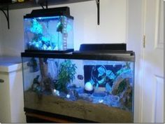 Creating second levels in your crabitat