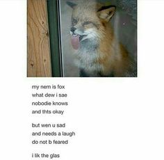 Nov 2019 - Here Are Some Funny Animal Poems To Brighten Up Your Day - World's largest collection of cat memes and other animals Funny Animal Memes, Cute Funny Animals, Cute Baby Animals, Cat Memes, Funny Cute, The Funny, Hilarious, Poem Memes, I Lik The Bred