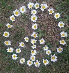 Peace~Daisies