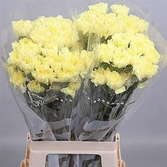 Carnation Hermes is a Yellow/Cream cut flower. It is available wholesale in Batches of 10 stems. A beautiful delicate coloured flower, useful in wedding floristry work and also general floristry. Flowers Uk, Amazing Flowers, Fresh Flowers, Wedding Flowers, Yellow Carnations, Yellow Flowers, Florist Supplies, Yellow Wedding, Flower Arrangements