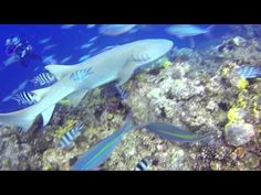 Shark | life of Shark | Seabed nature | Underwater Life | file Documentary