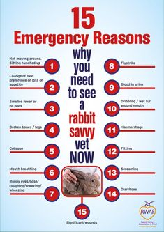 Rabbits do find vet trips stressful but seeing a rabbit-savvy vet is vital for their long term good health. As prey animals rabbits will often only show their symptoms when they are severely … Mini Lop Bunnies, Pet Bunny Rabbits, Dwarf Bunnies, Holland Lop Bunnies, Rabbit Toys, Pet Rabbit, House Rabbit, Poodles, Bunny Care Tips