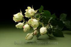 Baby Rio® GREEN ARROW Spray Rose