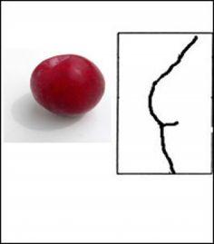 Se dice que la forma del pecho revela nuestro caracter ¿Será verdad? - Disgoo   Red del conocimiento