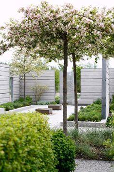 modern trädgård körsbärsträd