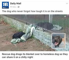 Heartwarming moment rescue dog drags blanket over to homeless pooch Animals And Pets, Funny Animals, Cute Animals, Baby Animals, Rescue Puppies, Dogs And Puppies, Doggies, I Love Dogs, Cute Dogs