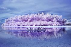 """The Micronesian atoll of Pingelap is sometimes called """"The Island of the Colorblind."""" Most of its population is affected by complete achromatopsia, or total color blindness. A few years ago, the Belgian photographer Sanne De Wilde travelled there to shoot traditional black-and-white photographs and digital-infrared images, which she used to challenge her own understanding of color. After returning to Amsterdam, she asked color-blind collaborators to paint over some of the black-and-white…"""