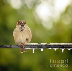 Cold Feet by Artist David Cutts.  A single sparrow on a metel rod with icicles on it.