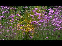 ERNESTO CORTAZAR - UNBELIEVABLY YOURS - BEAUTIFUL COUNTRY FLOWERS FOR YOU - YouTube