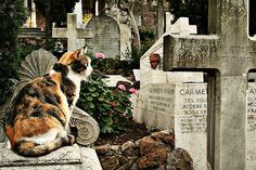 The silent custodians of the Pyramid cemetery in Rome