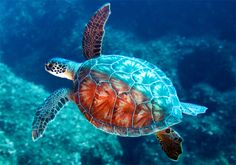pictures of turtles