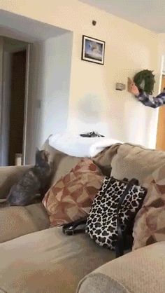 New GIF tagged via Giphy http://ift.tt/1XftOad