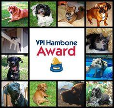 The Final Days of VPI Hambone Award Voting