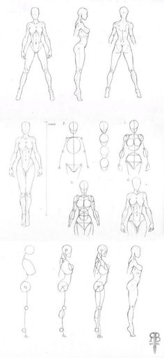 2143 best human anatomy drawing images in 2019 anatomy reference Skin and Face Muscles Anatomy character design collection female anatomy human anatomy drawing human figure drawing figure drawing
