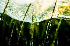 Glitter glans glim puur natuur Koop 'Spider pearls' van Susan Hol voor aan de muur