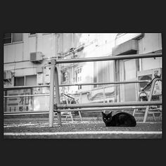Cat March 2015 #cat #blackandwhitephotography