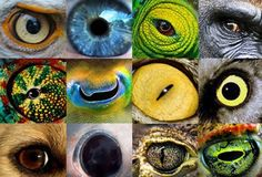 animales que ven enla oscuridad - Buscar con Google