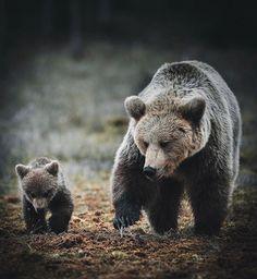"37.7k Likes, 167 Comments - Wildlife Planet (@wildlifeplanet) on Instagram: ""Finland | Photo by @stiannorum #WildlifePlanet"""