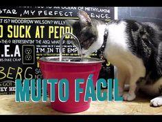 DIY: Como fazer uma fonte para gatos fácil e barata - YouTube