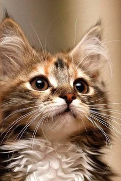 Fluffy ears!