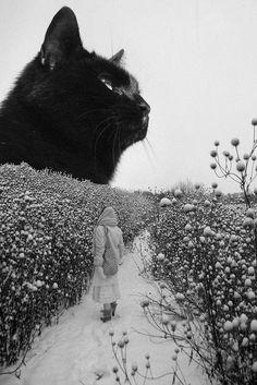 BIC noir chatte