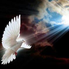 Pix For > Peace Dove Wallpaper Saint Esprit, Peace Dove, Art Pictures, Photos, White Doves, Mosaic Art, Beautiful Birds, Holy Spirit, Free Spirit
