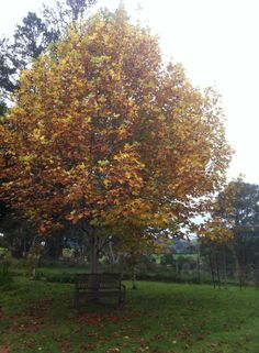 The Changing Colours of autumn