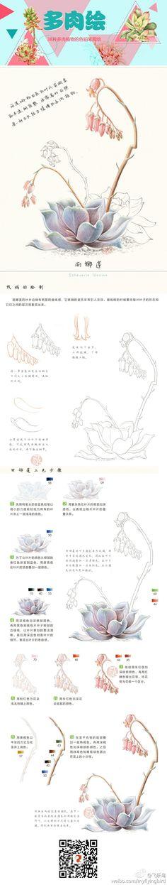 .飞乐鸟 Botanical Drawings, Botanical Art, Botanical Illustration, Colored Pencil Tutorial, Colored Pencil Techniques, Plant Drawing, Painting & Drawing, Pencil Drawings, Art Drawings