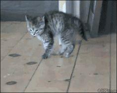 FRIDAY CATS – gifs de gatinhos prodígio - Pop Up - Kzuka