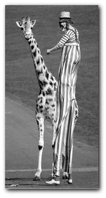 clown on stilts with girafffe