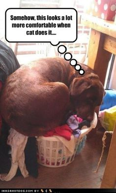 funny dog pictures - Somehow, this looks a lot more comfortable when cat does it....