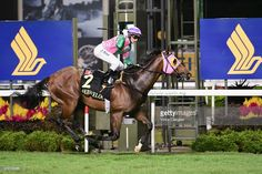 Aerovelocity (NZ) 2008 B.g. (Pins (AUS)-Exodus (NZ) by Kaapstad (NZ) 1st International Sprint (SIN-G1,1200mT,Kranji) (photo: Getty Images/Vince Caligiuri)