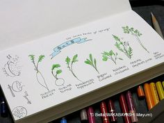 2014_01_06_nanakusa_03_s it is our tradition to eat rice porridge with seven herbs on 7th January.  for this drawing I used: Faber castell polychromos Midori traveler's notebook  © Belta(WAKABAYASHI Mayumi)