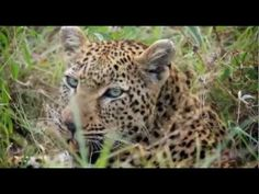 South African Safari with Rhino Africa