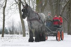 Poland - look at the size of thst horse!