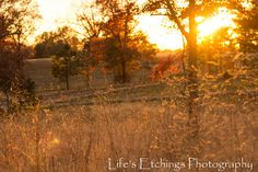 Sunset Field - 8x10 Nature Shot. $25.00, via Etsy.