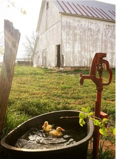 Water pump on the farm with ducklings. Water pump on the farm with ducklings. Country Barns, Old Barns, Country Life, Country Living, Country Roads, Country Charm, Cenas Do Interior, Esprit Country, Zone Rurale