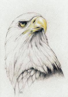 Resultado de imagen para eagle drawing tumblr
