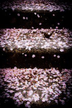 花びら/sakura