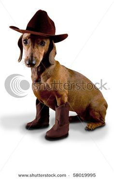 Dog in cowboy boots and hat?  Yes, please. I did this to Bratt when he was a pup