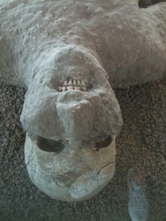 Mummified human from volcanic ash, in Pompey.