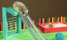 Het baasje van deze hamster weet precies hoe hij het diertje blij kan maken. Met een zelfgemaakte speeltuin maakt hij veel indruk en het beestje lijkt enorm in z'n sas. Voor je het weet klimt ie de glijbaan op. Woei! Bron:…