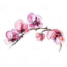 the watercolor flowers orchid isolated on the white background - Buy this stock illustration and explore similar illustrations at Adobe Stock Body Art Tattoos, Tattoo Drawings, Small Tattoos, Sleeve Tattoos, Tatoos, Watercolor Orchid Tattoo, Watercolor Flowers, Orchids Painting, Future Tattoos