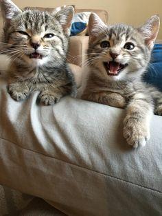 Kitties for! - Album on Imgur