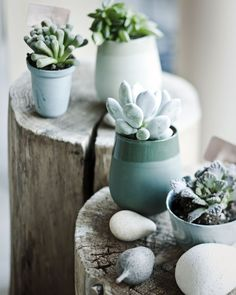 Cactus in blue Green Plants, Air Plants, Potted Plants, Indoor Plants, Indoor Cactus, Plant Pots, Cacti And Succulents, Planting Succulents, Planting Flowers